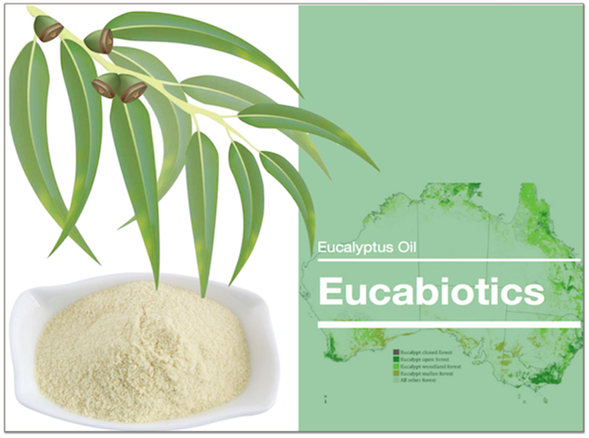 Eucabiotics—Phytogenic feed additives ( Australia Eucalyptus Oil)